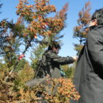 花粉症の発生源対策、視察報告【花粉症対策ブログその③】